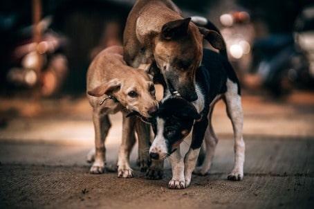 Danni causati da cane randagio
